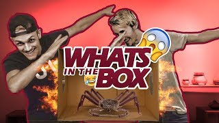 What's in the Box!? - Link