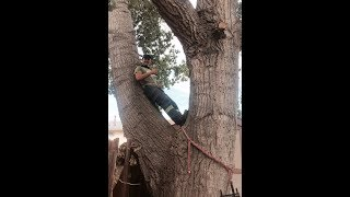 Certified arborist and owner of Tree Ninja, Benoit Boudreau, attest...
