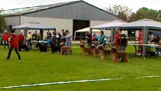 Emmi At The Dutch Briard Club Show