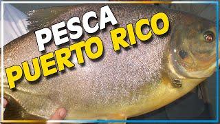La pesca en Puerto Rico, Misiones