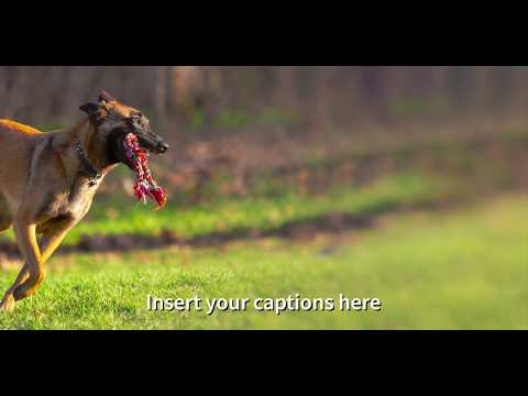 Belgian Malinois playing at the dog park while the armory shoots a really big gun