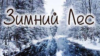 лес зимой, поход по зимнему лесу, заброшка, землянки, тоннели, заброшенная воинская часть