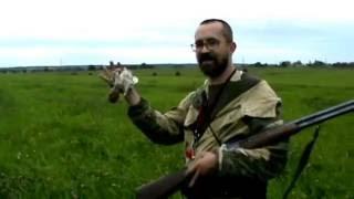 Полевая охота с легавой (Ирландский сеттер)
