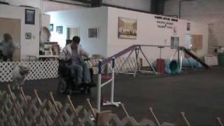Dog Agility Class With Handler Using Power Wheelchair