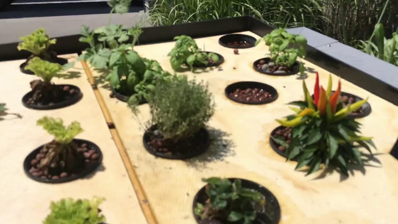 Wie Sie Ihr Wasserbecken im Garten algenfrei anlegen und