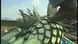 видео История напитка текилы