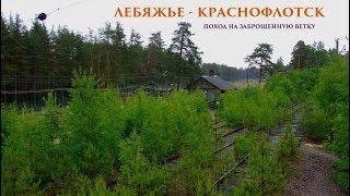 Поход на заброшенную железнодорожную ветку Лебяжье - Краснофлотск в Ленобласти.