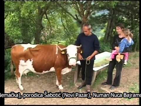 Hido Muratovic - Porodica Milanovic dobila kravu.