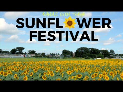 Kiyose Sunflower Festival 2016 | 清瀬ひまわりフェスティバル2016 | Kanai even Tokyo