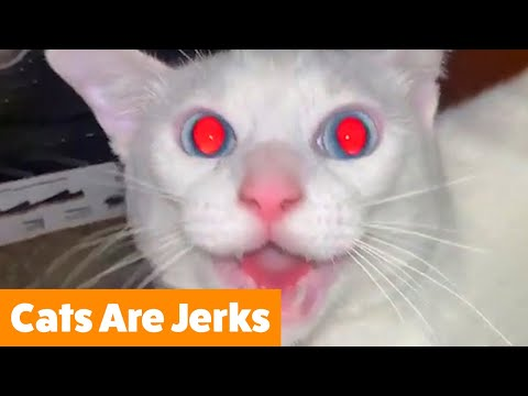 Cats Are Jerks | Funny Pet Videos