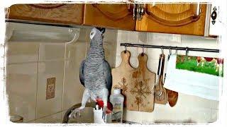 ПРИКОЛЫ С ПОПУГАЯМИ, приколы с животными | FUNNY PARROTS, fun with animals #550