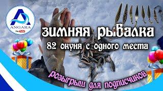 Зимняя рыбалка 82 окуня с одного места Внимание сюрприз для подписчиков