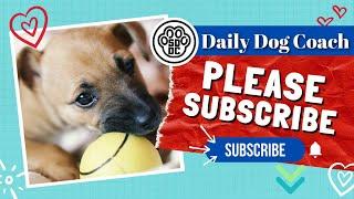No Leash Dog Training Behavior Modification