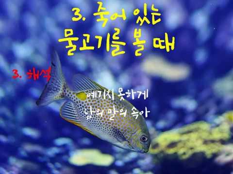 """물고기 """"꿈"""" 해몽"""