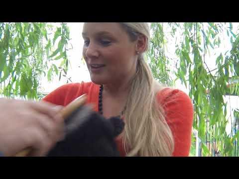 Finnish Lapphund Shanook's adoption day..