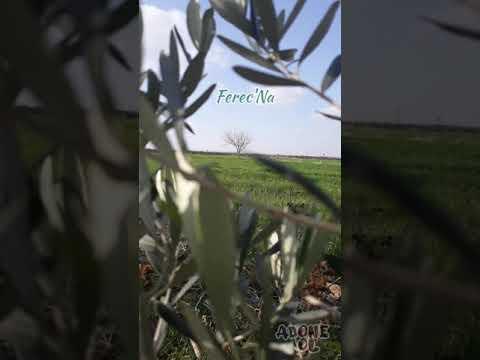 Mem Ararat - Pivok - Pîvok indir