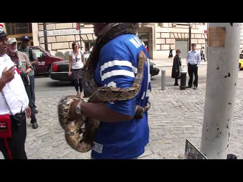 Snakes at Charging Bull - NY