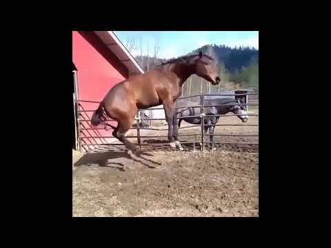 Çukur'un atı bu hayatın heycanı meycanı yok