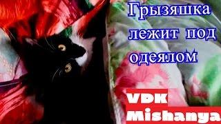 Кошка Пушинка младшая лежит под одеялом