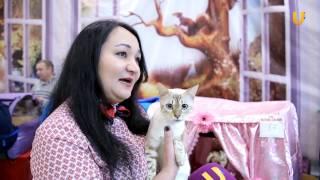 Глазами животных, выпуск 260 Автоакция от фонда «Добрые руки», Международная выставка кошек