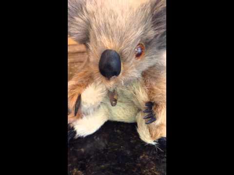 Musical wind up koala plush