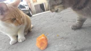Koty jedzą marchewkę
