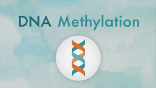 How DNA methylation works
