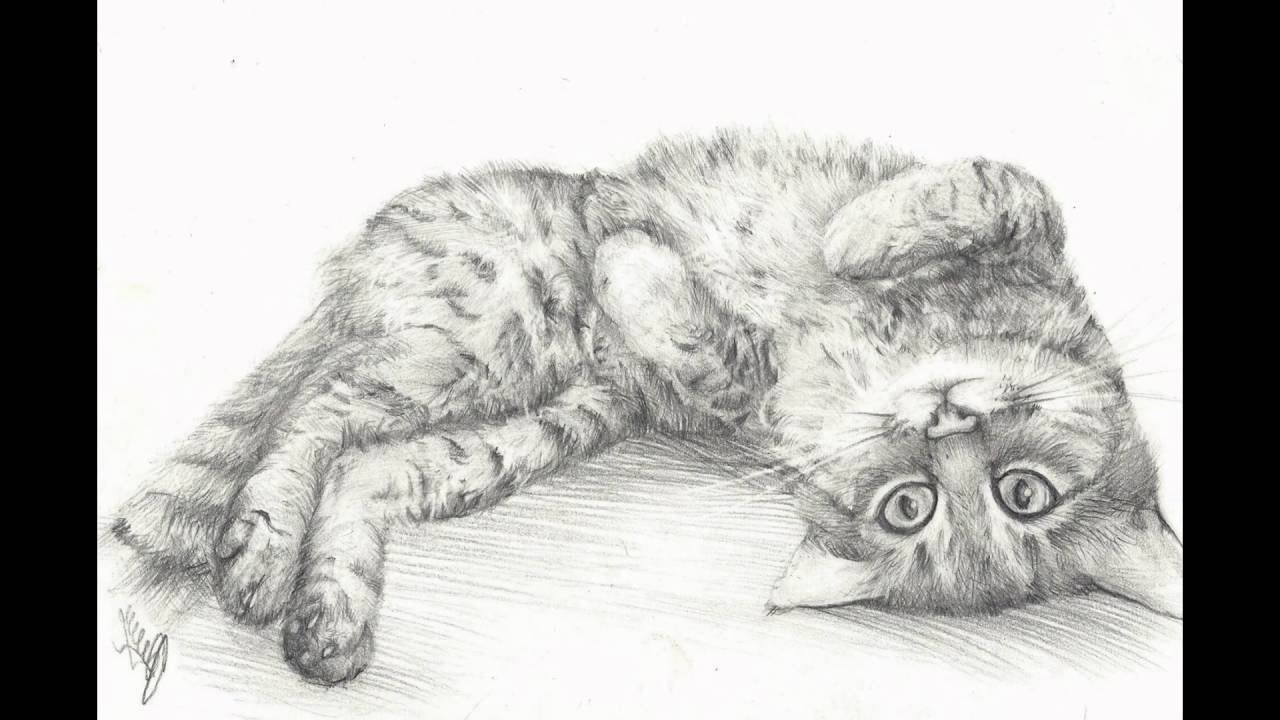 Uncategorized Drawn Pictures Of Animals beautifully drawn animals youtube animals