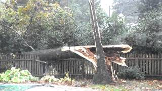 Tree Falling in Hurricane Sandy