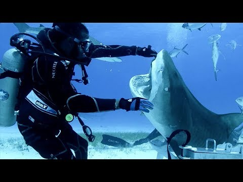 Sharks in the Bahamas   Blue Planet Live   BBC Earth
