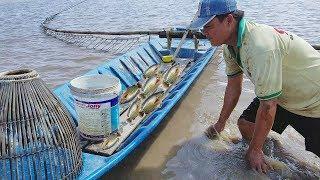 Đánh Bắt Kỳ Thú | Nhiều Người Nói Đánh Bắt Kiểu Tận Diệt??? l Catching Lots Of Fish with Bare Hands