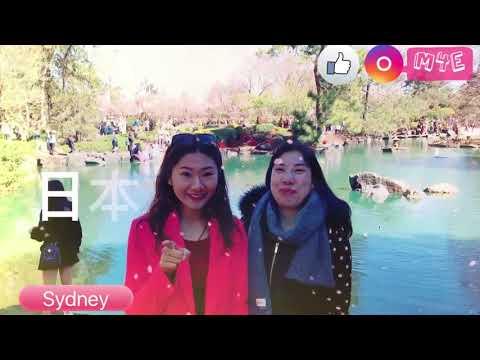 M4E - Mandarin for English Learners - Revision - Sydney Cherry Blossom Festival