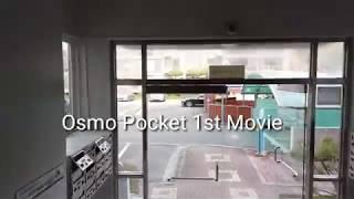 오즈모포켓 첫영상