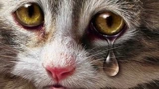 Why Do Cats Cry? What Should You Do When Your Cat Cries?
