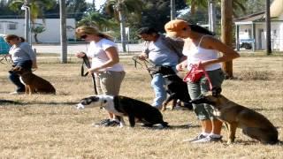 Dog Trainin