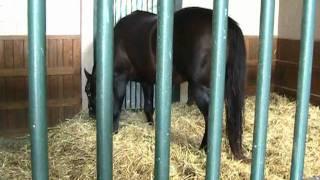 Coleen Visits Horse Farms in Lexington, Kentucky