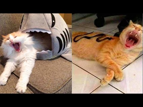Try Not To Laugh Watching Funny Animals Compilation | Funniest Animals Videos (2020)