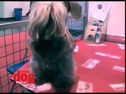 Cesky Terrier Onewoof
