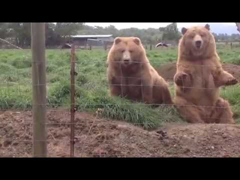 Download Youtube: Smarter than the Average Bear?