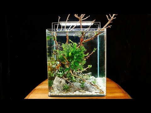 HOW TO AQUASCAPE a Dennerle NanoCube Planted Tank (30K sub special)