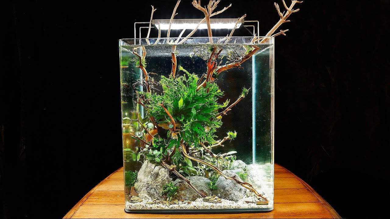 How To Aquascape A Dennerle Nanocube Planted Tank 30k Sub Special Youtube