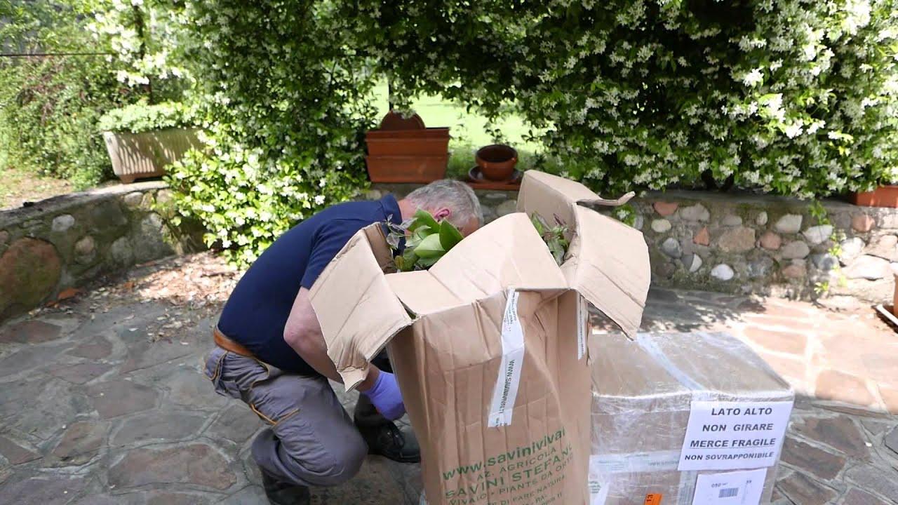 Il mio primo acquisto di piante da orto via internet su for Piante acquisto