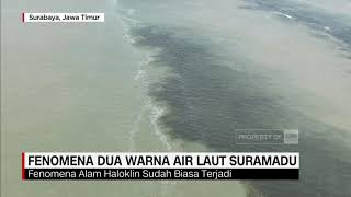 Fenomena Dua Warna Air Laut Suramadu