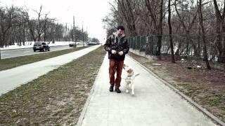 Spacer kontrolowany. Czyli jak wyprowadzac psa na spacer.