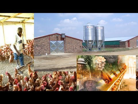 How I Built Poultry House For 1000 Birds -How To Start Poultry Farm Step By Step: The Structures