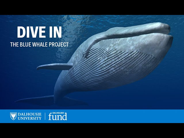 Learn more: projectdal.ca/bluewhale