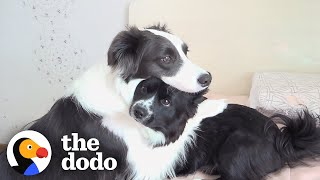 This Dog Wont Leave Her Little Brothers Side When Hes Sick | The Dodo
