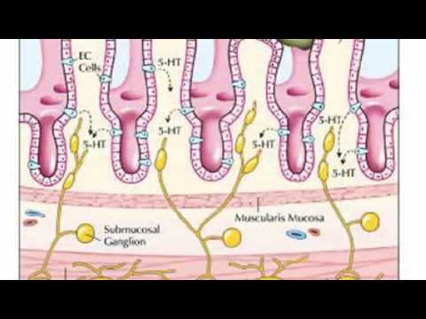 Serotonin and the Gut Brain Connection