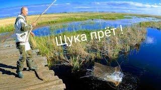 Рыбалка на паук Розыгрыш вяленного чебака Рыбалка на подъемник рыбалка 2019 Приколы на рыбалке