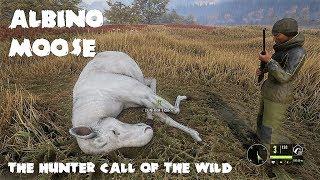 theHunter - Call of the wild - Albino Moose